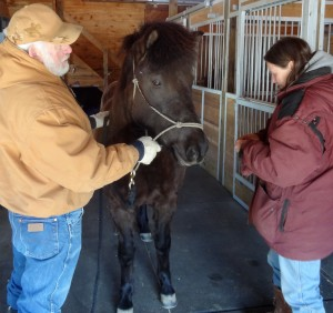 Dr. Reynolds treats a horse while husband Elijah Moore assists.