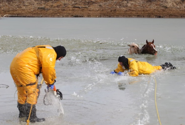 Firefighters Save Horses From Icy Pond Best Horse Practices