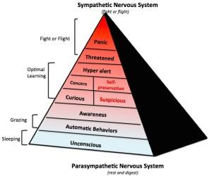 Evidence-Based Horsemanship diagram