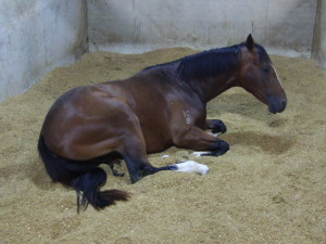How not to care for your equine