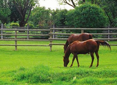 Horses_in_Pasture