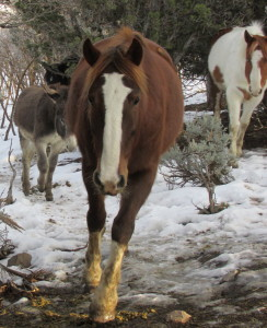 A winter image of Sackett, Wallace the burro, and Jodi