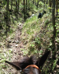 Jolene is extra wary when riding in a gully with steep sides.