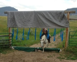 Front view of horse working through the obstacle