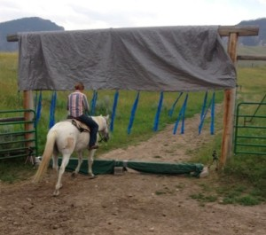 Hind view of horse working through obstacle