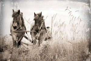 wheat horses farm 1920x1280 wallpaper_www.wallpaperhi.com_2
