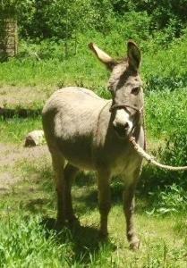 burro copy