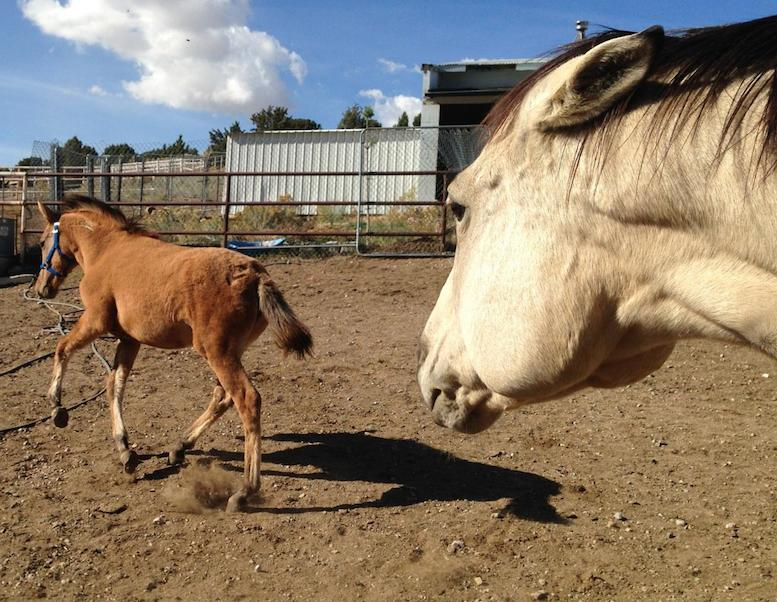 The filly, Zita, learns some social graces with new paddock mate, Maggie.