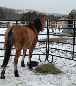 Alita in her new digs, closer to future herd mates