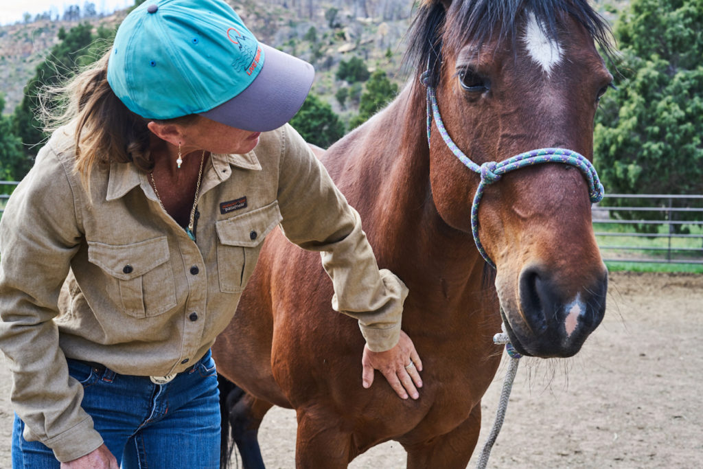 Patagonia To Outfit Bhp Summit Presenters Best Horse